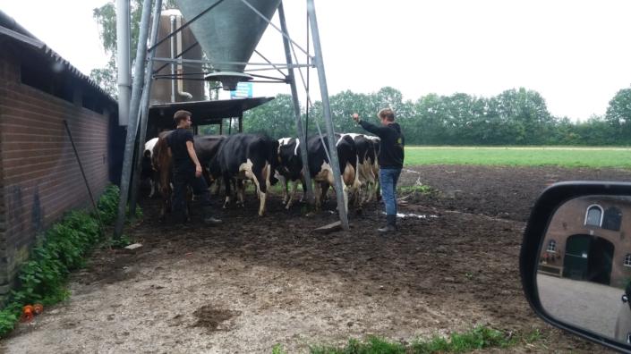 koeien-barneveld