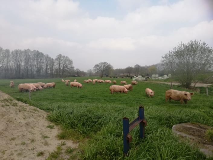 weiland-zorgboerderij-barneveld